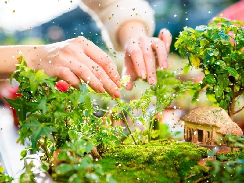Amazing Fairy Garden Kits to Gift for Mother's Day
