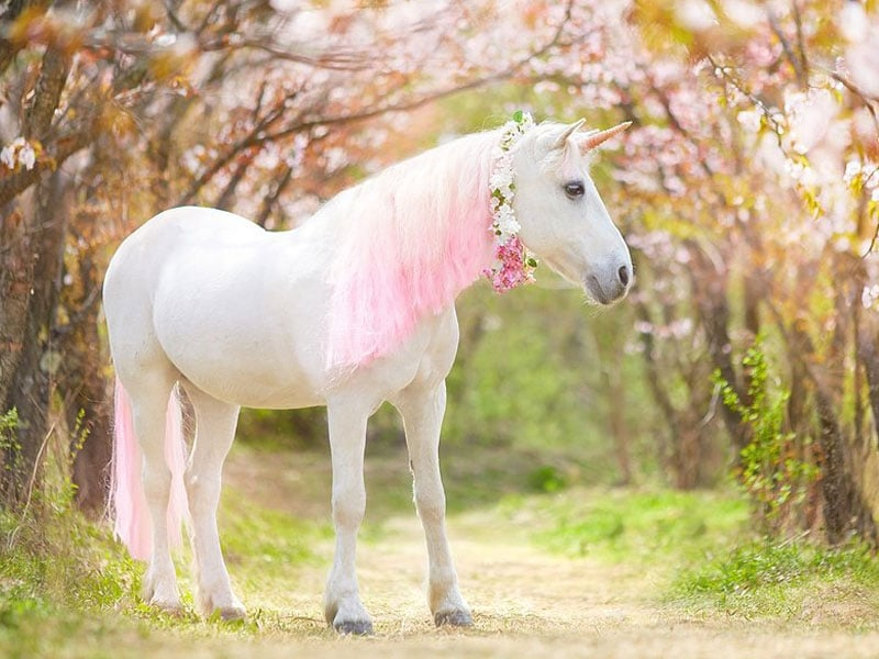today is unicorn day
