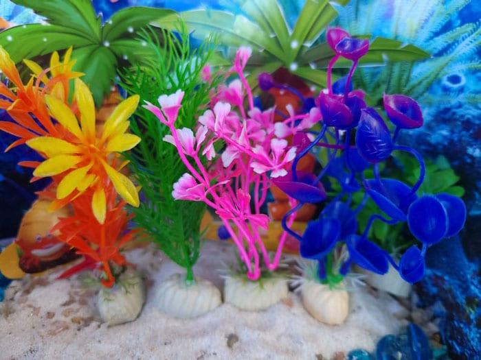 mermaid fairy garden plants