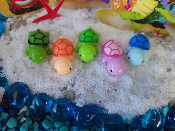 turtles are coming to the beach