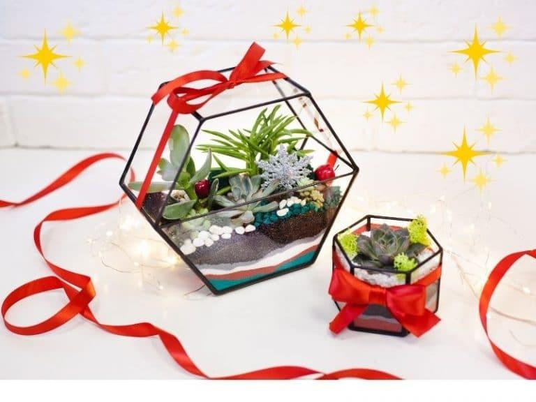 adorable terrariums